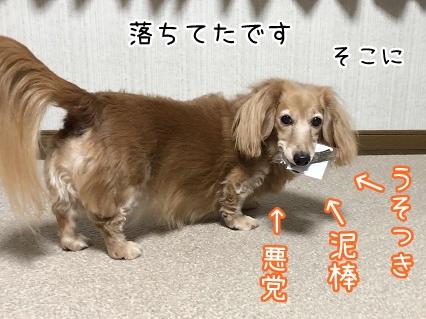 kinako10977.jpeg
