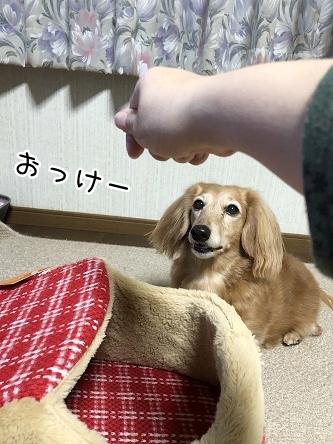 kinako10981.jpeg