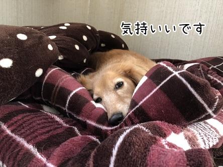 kinako10987.jpeg