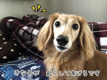 kinako10992.jpeg