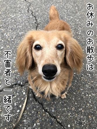 kinako11004.jpeg