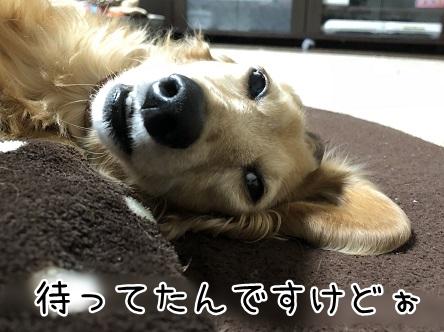 kinako11021.jpeg
