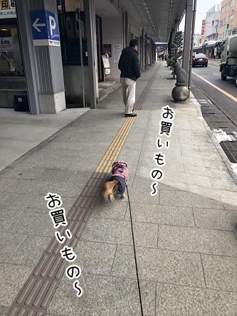 kinako11038.jpeg