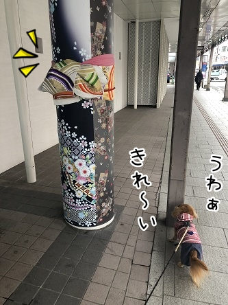 kinako11040.jpeg