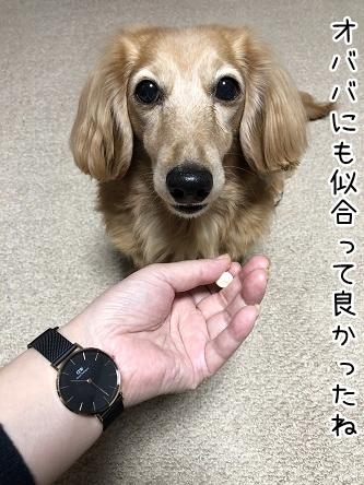 kinako11052.jpeg