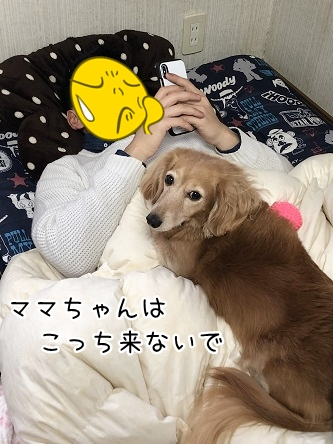 kinako11071.jpeg