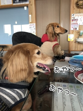 kinako11080.jpeg