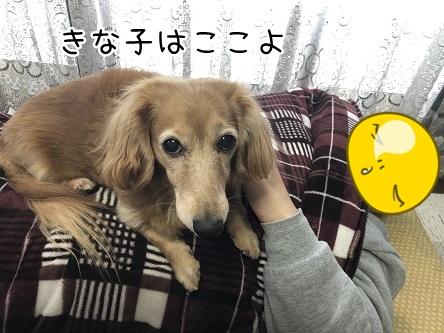 kinako11082.jpeg