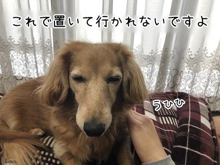 kinako11085.jpeg