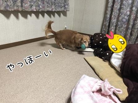 kinako11095.jpeg