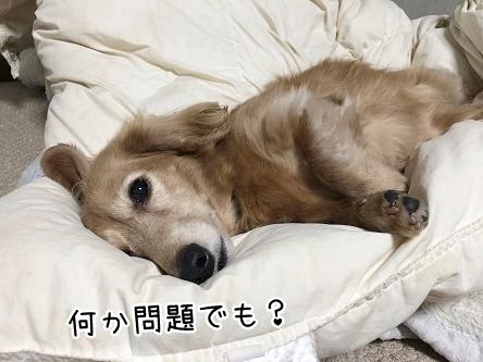 kinako11098.jpeg