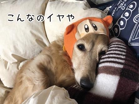 kinako11101.jpeg