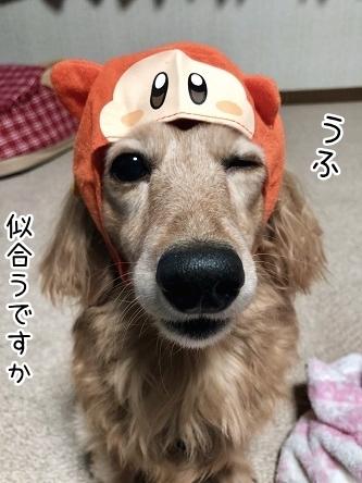 kinako11102.jpeg
