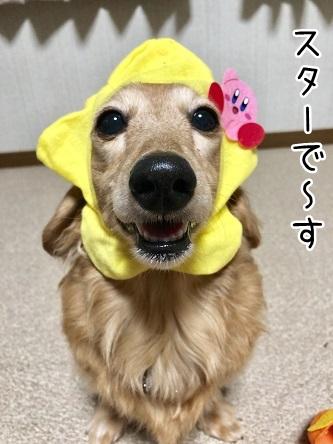kinako11103.jpeg