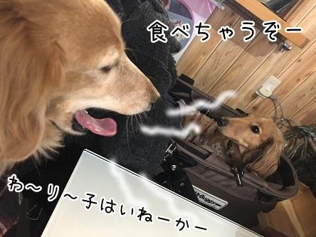 kinako11110.jpeg