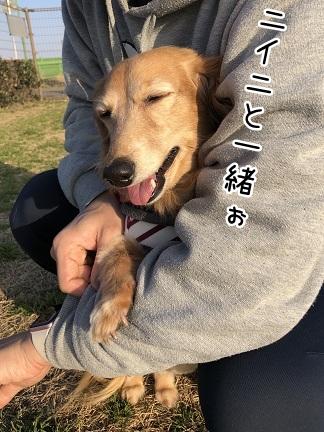 kinako11120.jpeg
