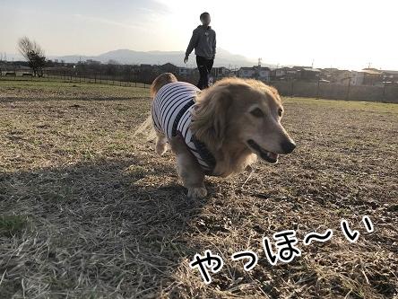 kinako11125.jpeg