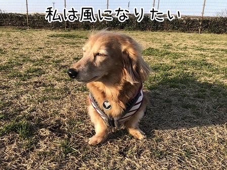 kinako11130.jpeg