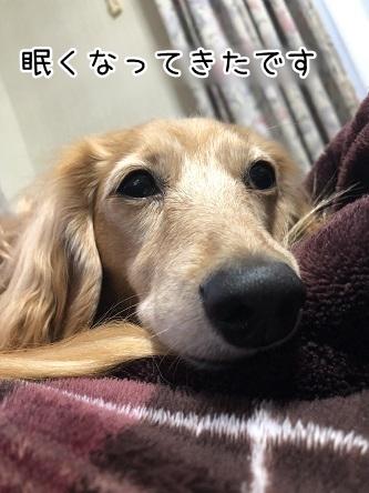 kinako11141.jpeg