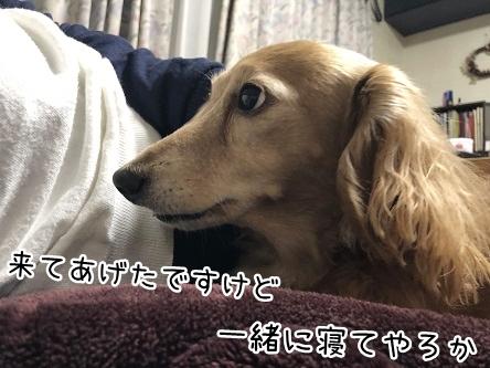 kinako11144.jpeg