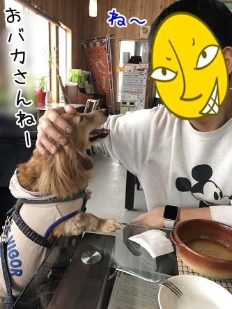 kinako11155.jpeg