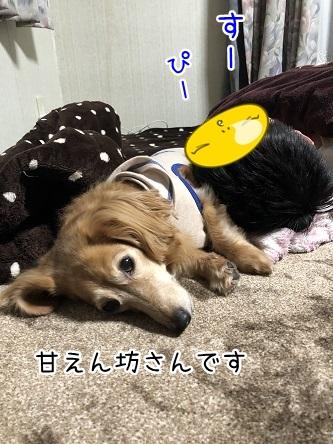 kinako11175.jpeg
