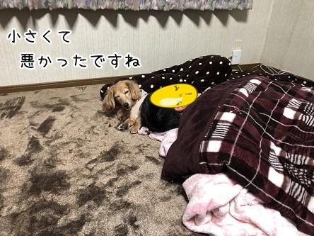 kinako11176.jpeg
