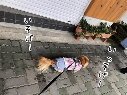 kinako11177.jpeg