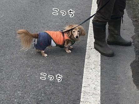 kinako11188.jpeg