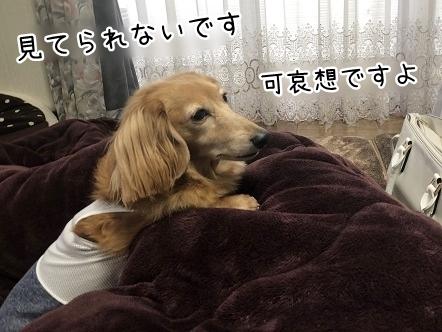 kinako11206.jpeg
