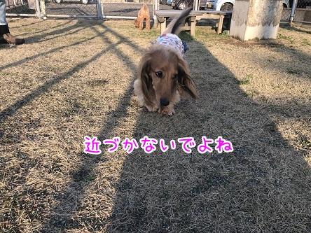 kinako11215.jpeg