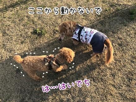 kinako11216.jpeg