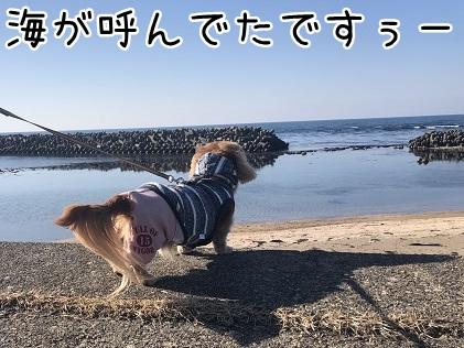 kinako11221.jpeg
