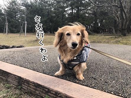 kinako11232.jpeg