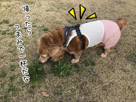 kinako11233.jpeg