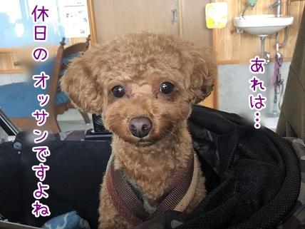 kinako11235.jpeg