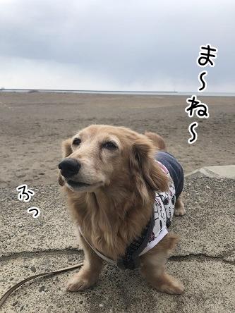 kinako11241.jpeg