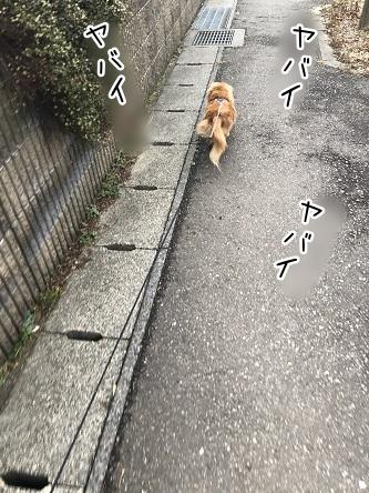 kinako11245.jpeg