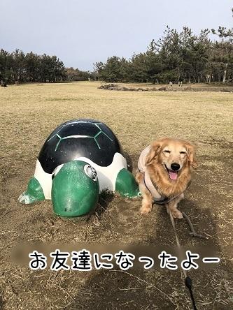 kinako11276.jpeg