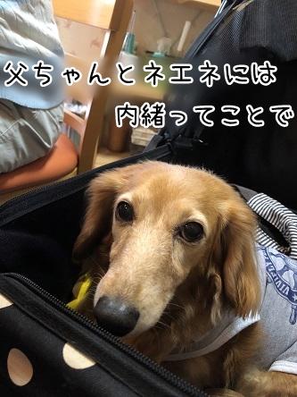 kinako11299.jpeg