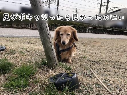 kinako11314.jpeg