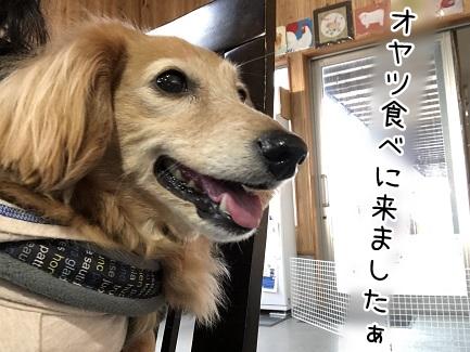 kinako11318.jpeg
