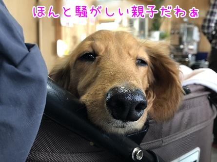 kinako11322.jpeg