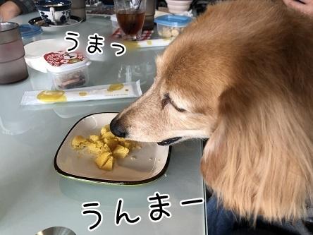 kinako11323.jpeg