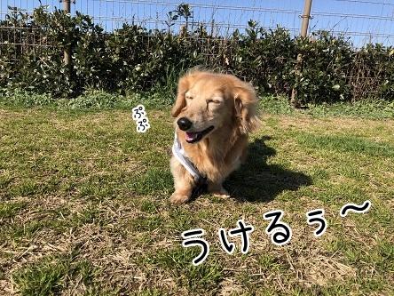 kinako11331.jpeg