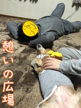 kinako11334.jpeg