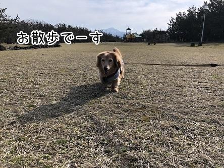 kinako11338.jpeg