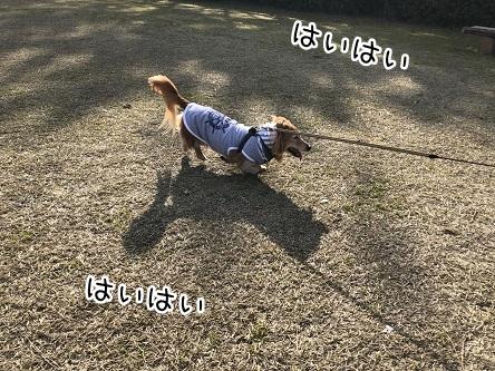 kinako11339.jpeg