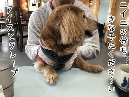 kinako11363.jpeg