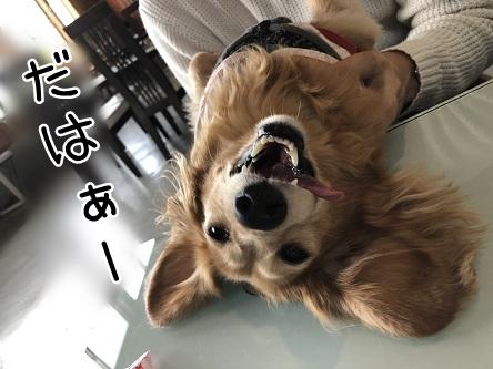 kinako11365.jpeg